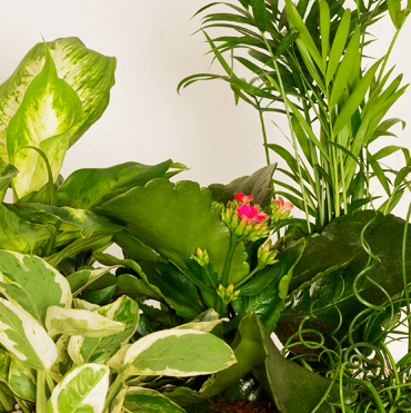 Plants / Dish Gardens