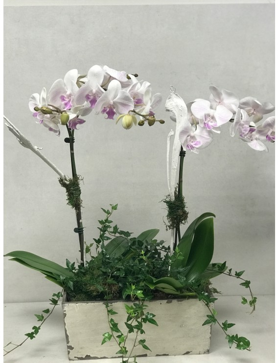 MAGESTIC ORCHIDS