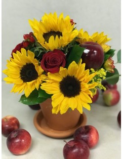 OCTOBER PROMOTION  ~ THANKSGIVING DAY SPECIAL OFFER  ~ LIMITED QUANTITIES!